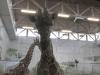 zoo-zamoc59bc487-17r-038